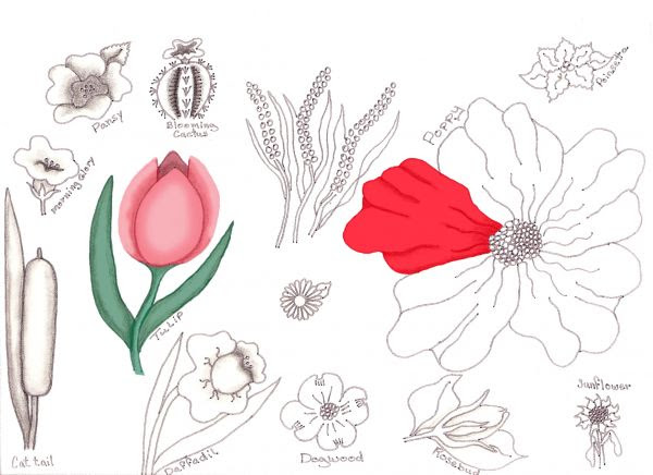 Flower Drawing Lessons Traditional Drawing Tutorial Pxleyes Com