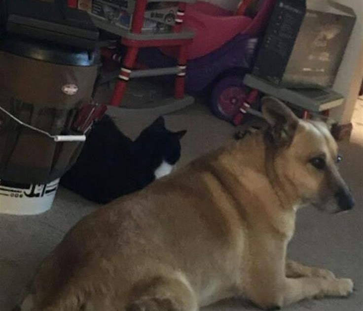 Craigslist Pets Ohio Cleveland - RTELEY