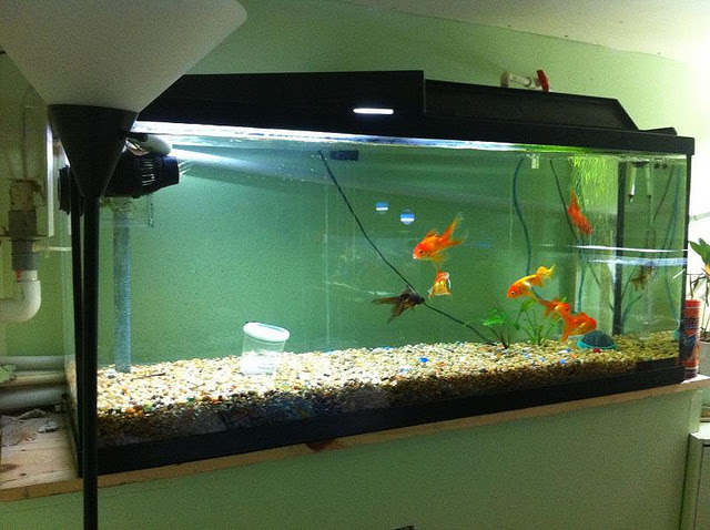 Fish Tank Set Up | A Freshwater Step-By-Step Guide