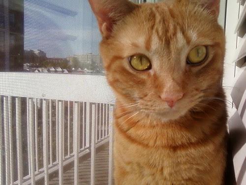 Stanley cat enjoying the 4th floor view