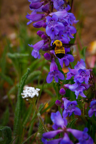Mountain flowers-7.JPG