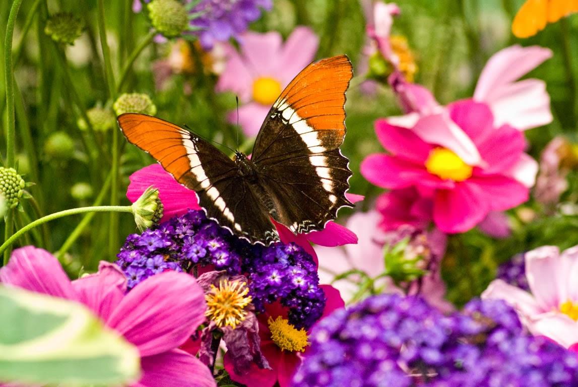 Live Wallpaper Butterflies - WallpaperSafari