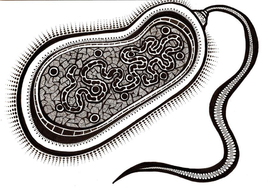 Las Bacterias Para Colorear Imagui