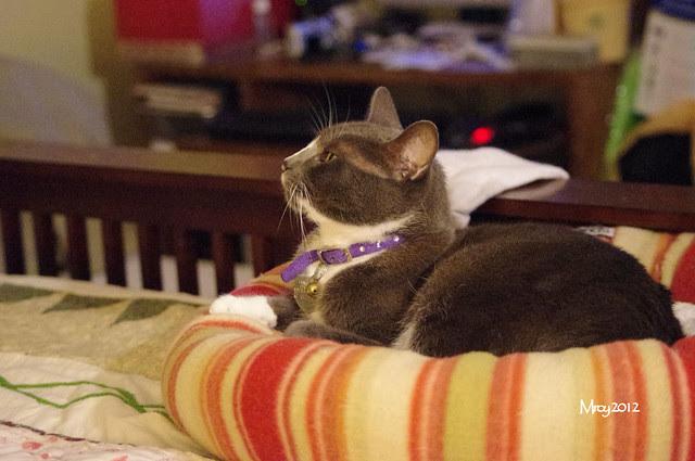 2012_09_30_2012 cats 026