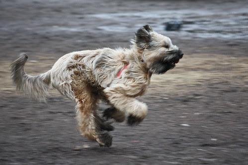 Run dog run!