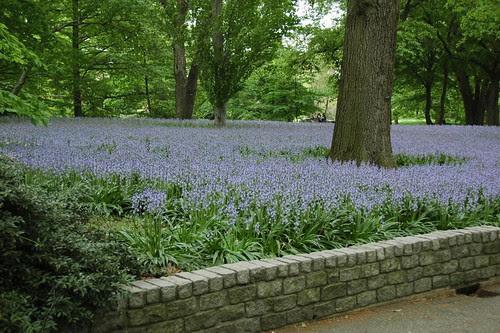 Blubell Wood