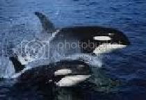 whales Pictures, Images and Photos