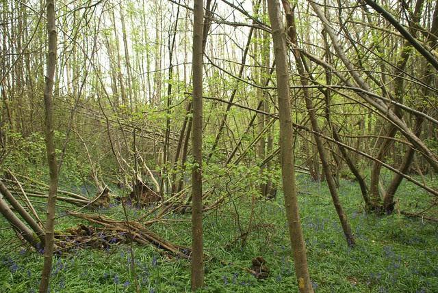 DSC_3955 woodland wind damage