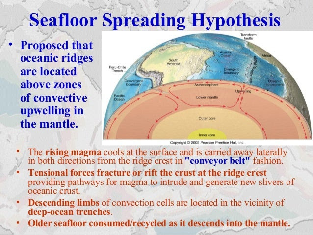 Seafloor Spreading Hypothesis • The rising magma cools at the surface and is carried away laterally in both directions fro...