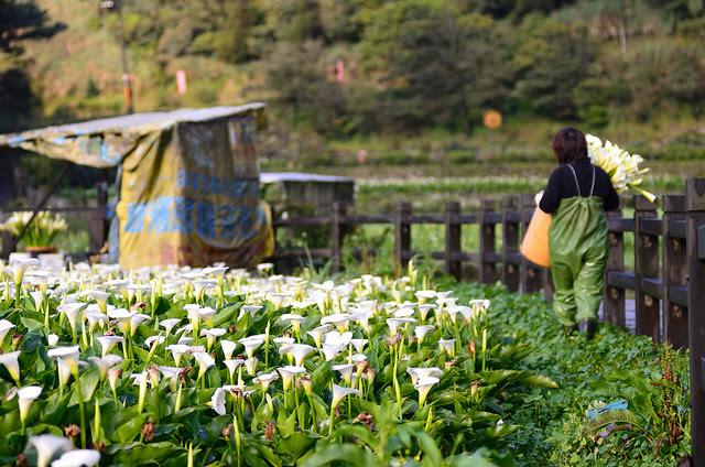 2013.03.16 台北 / 竹子湖