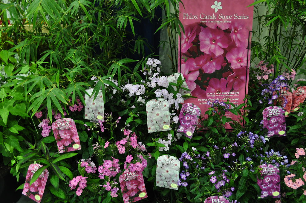 Phlox Candy Store Series