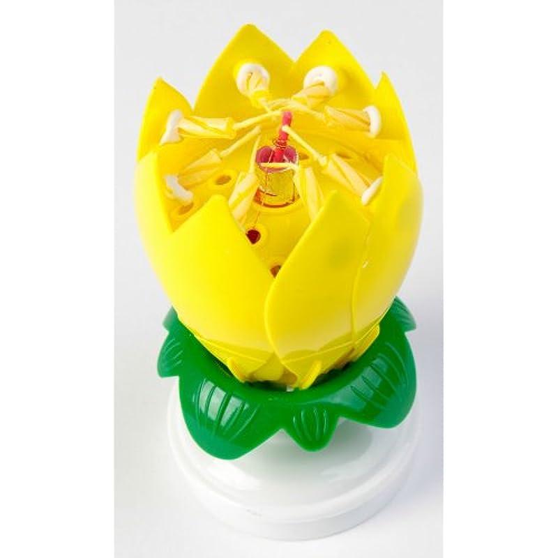 Amazing Happy Birthday Musical Magical Opening Lotus ...
