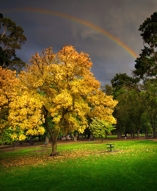 Coburg, Lake Reserve, Melbourne, Victoria, Australia IMG_6093_Coburg