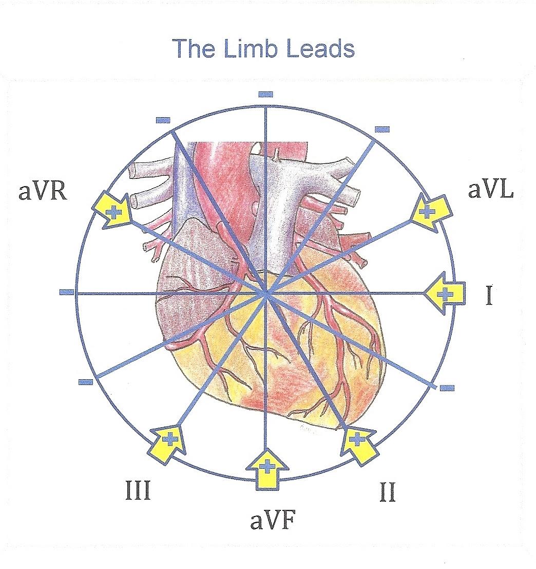Diagram 12 Lead Ekg Limb Diagram Full Version Hd Quality Limb Diagram Ssengineeringbd Gsxbooking It