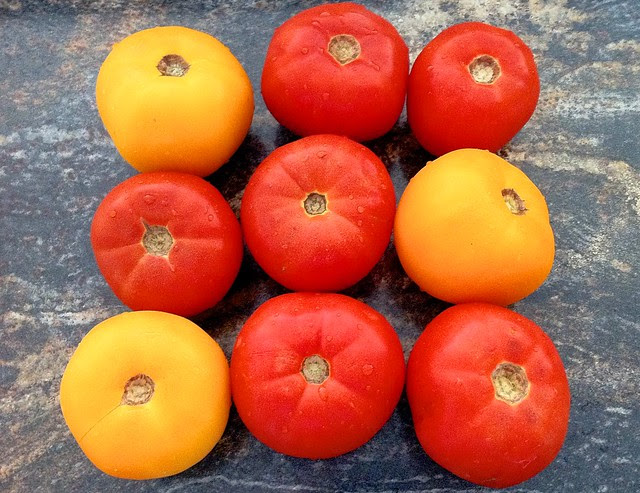 9 Large Ripe Tomatoes