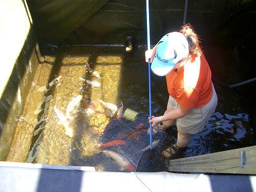 Fish Wrangler facebook application