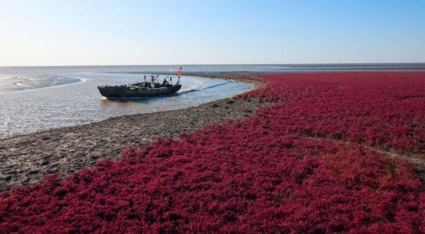 Η εκπληκτική Κόκκινη Παραλία στο Panjin της Κίνας (4)