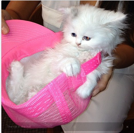 Cat in a hat: Kim has been madly tweeting photos of her cute new pet