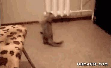 funny cat gifs  dr odd