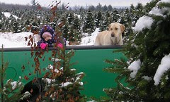 Jasper and friend inspecting the trees