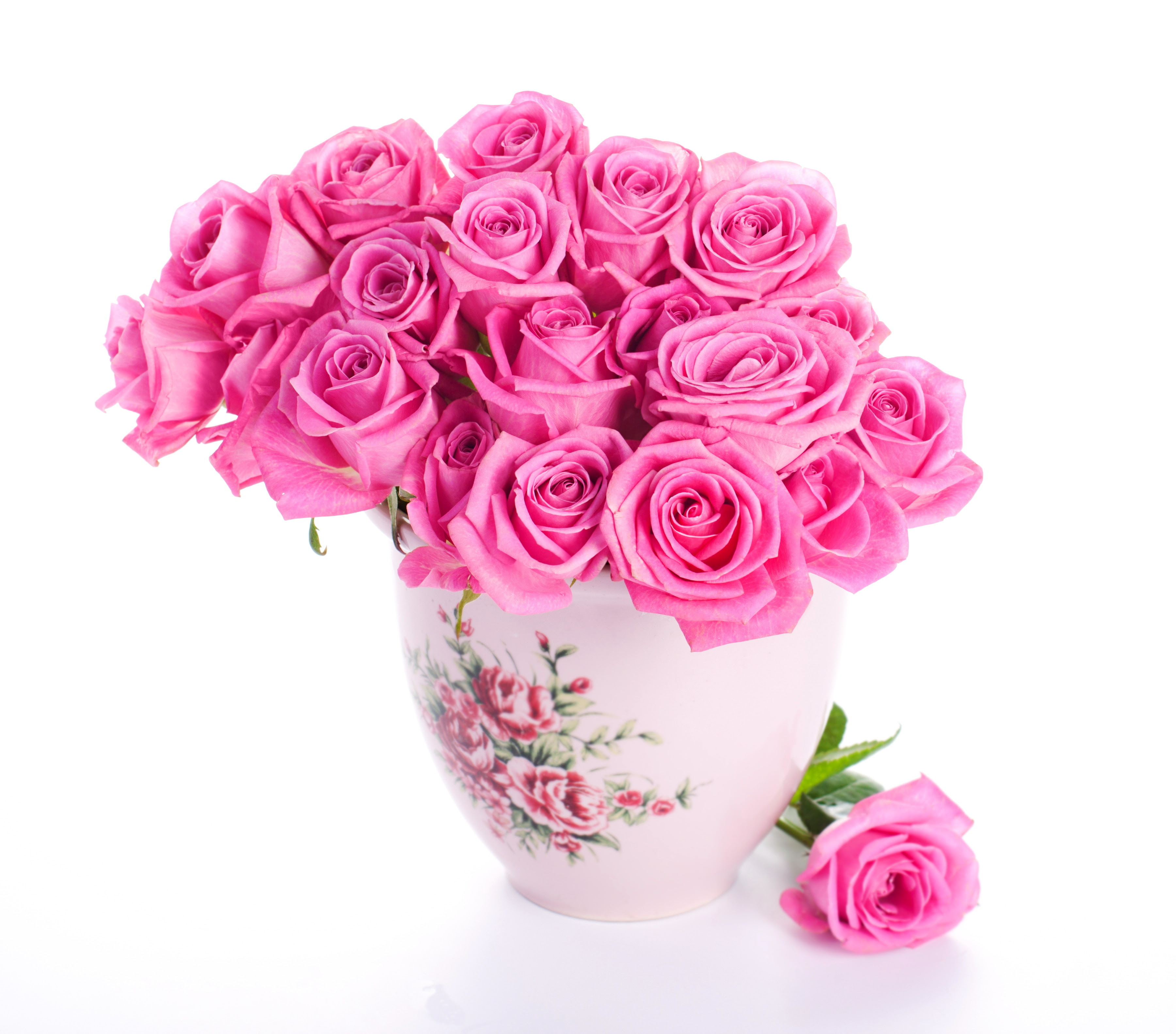 pink roses flowers beautiful photos
