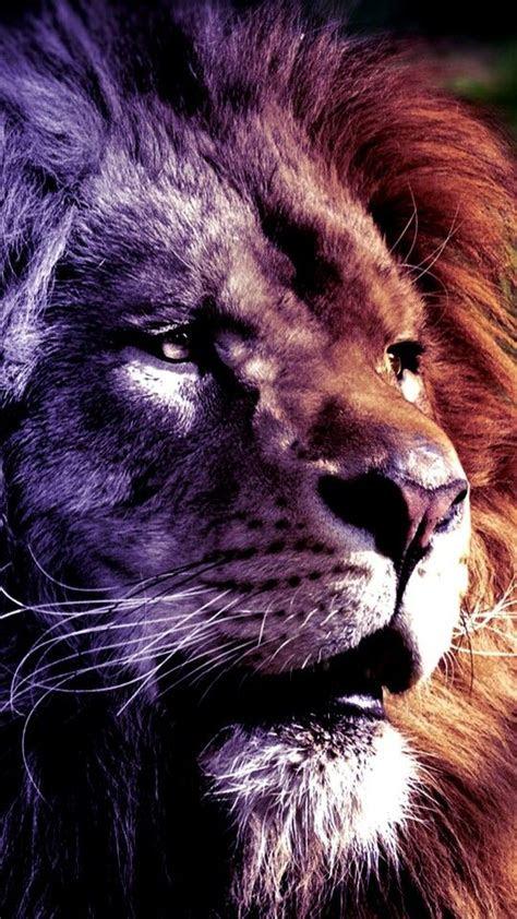 pin  markus kaletka  cats pinterest leon  lion