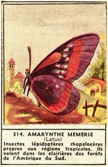 papillon 314