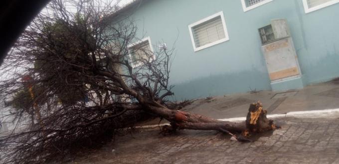 Currais Novos: chuva e ventos fortes destrói e causa pânico