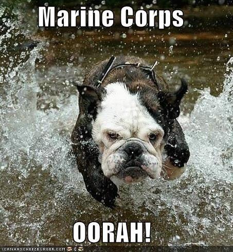 USMC Devil Dog!
