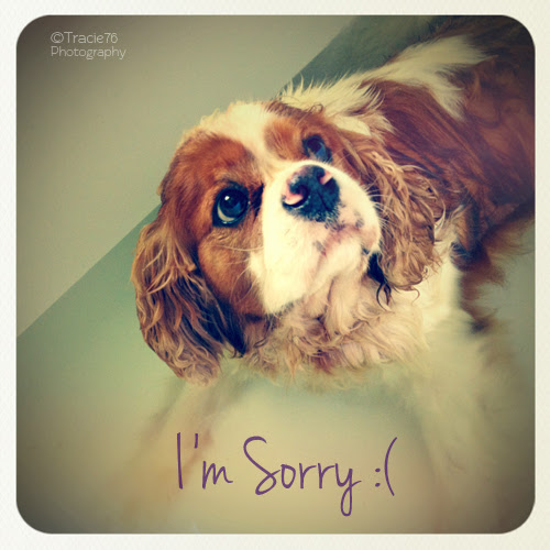 Im So Sorry Free Sorry Ecards Greeting Cards 123 Greetings