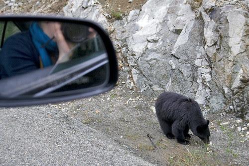 black bear & me