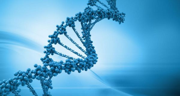Epigenetic changes affected levels or activity of genes without changing the underlying DNA sequence