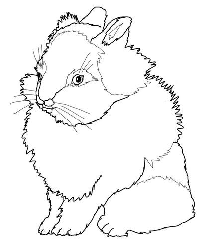 Dibujo De Conejo Cabeza De León Para Colorear Dibujos Para
