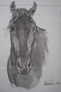 cavalo-Sueste