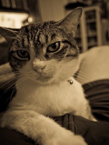 Lucy Cat P