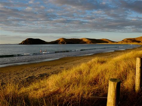 coromandel  zealand summer sea beach dry grass destop