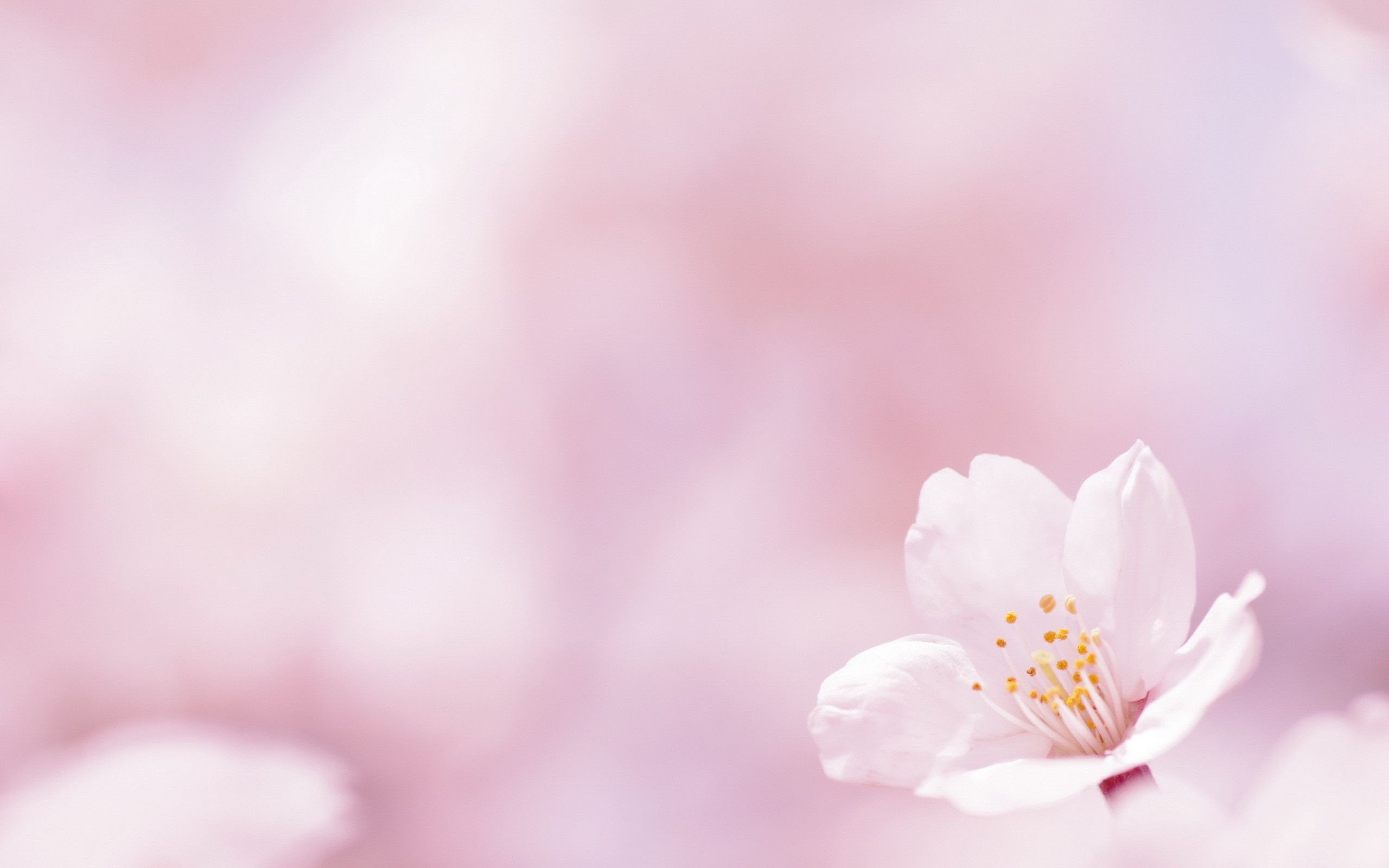 Spring Flowers Wallpaper Backgrounds Sf Wallpaper