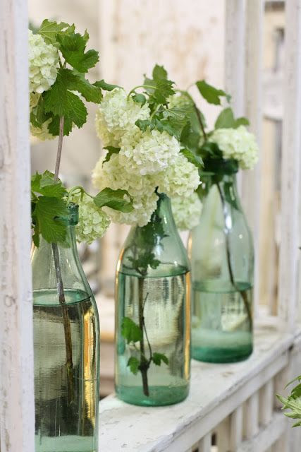 Limelight Hydrangeas in bottles