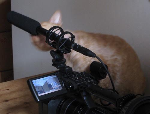 cat and camera landscape