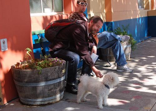 man patting dog.jpg