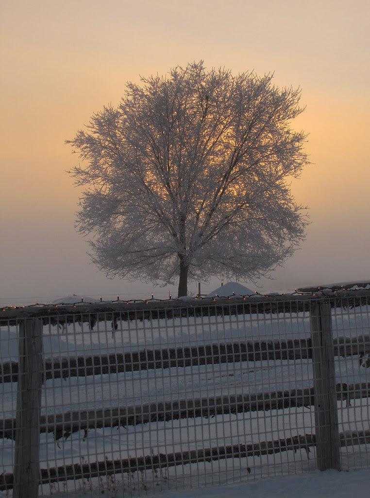 Glory Tree