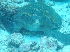 Galapagos 149 (2)