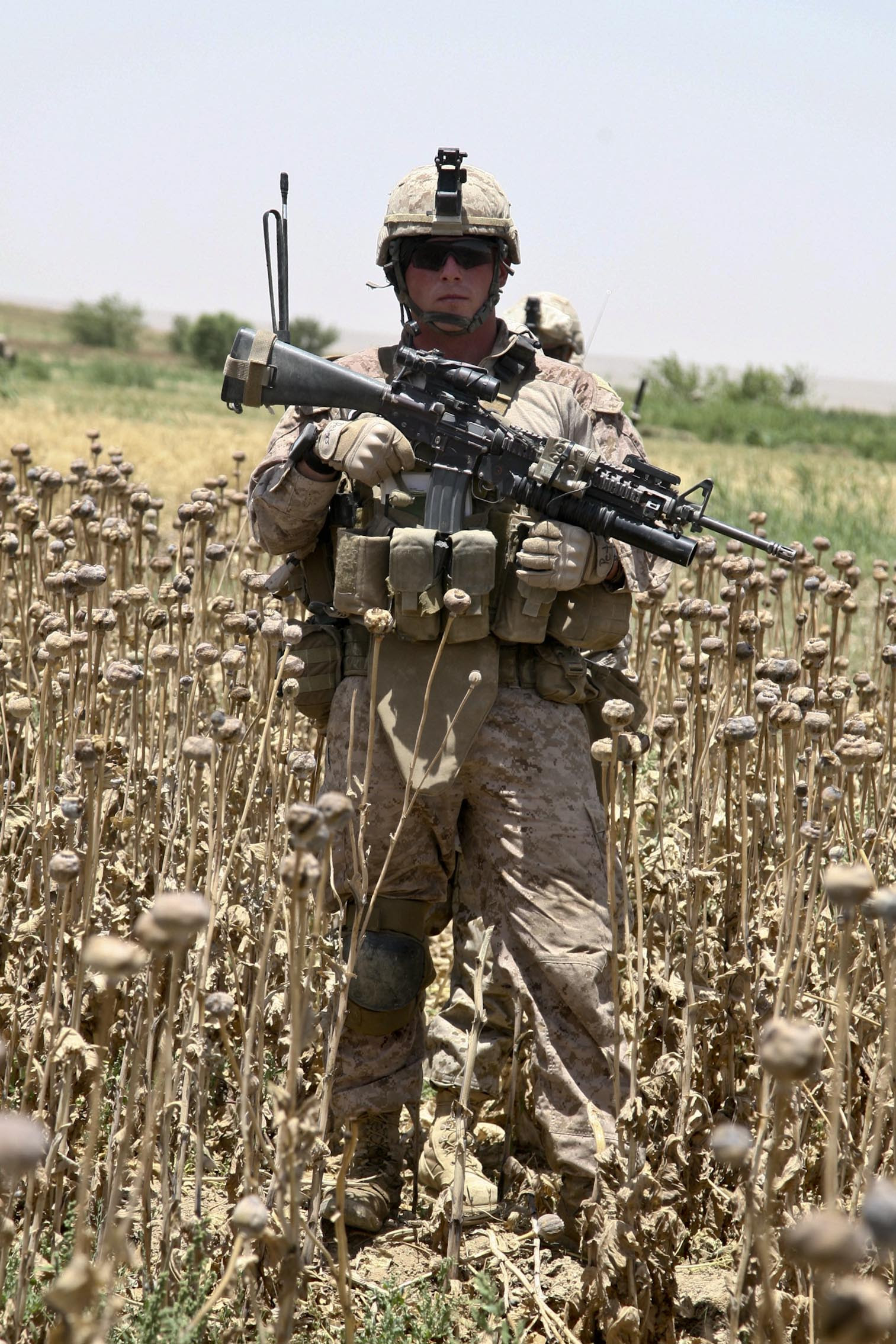 U.S. Marine Corps Cpl. James K. Peters stands in an opium poppy field while performing a foot patrol at Sangin, Afghanistan, May 19, 2011. (U.S. Marine Corps photo by Cpl. Jeremy C. Harris/Released)