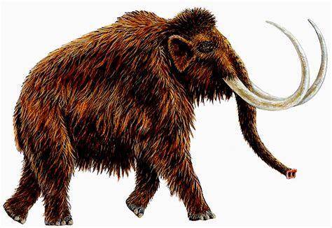 brain post frozen woolly mammoth   russia