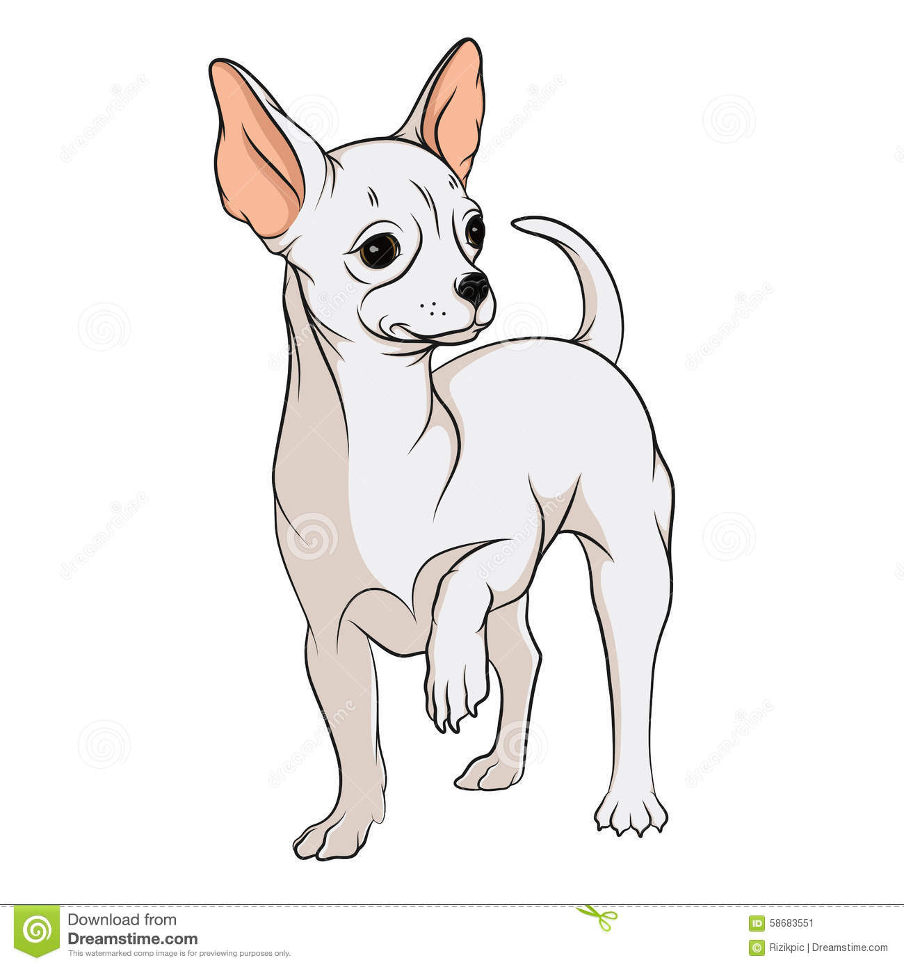 vector drawing chihuahua isolated objects white background 58683551