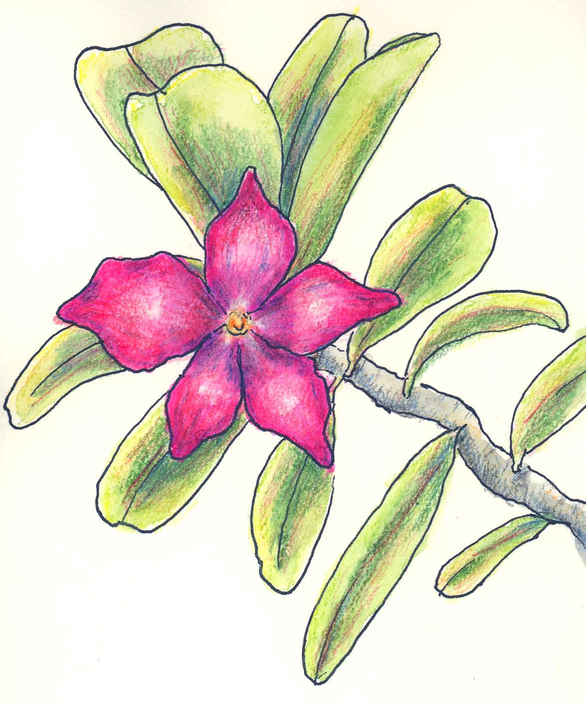 Flower Pictures For Drawing At Getdrawings Free Download
