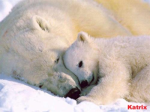 urso_polar_-7714