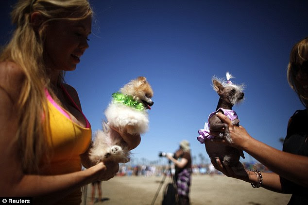 Meet and greet: The Californian dog surf competition was a pup groupie meat market