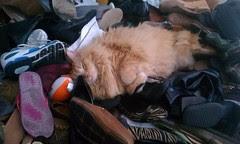 Jasper in nap paradise