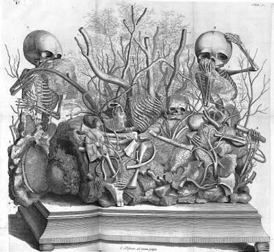Cabinet of Curiosities - foetal skeletons